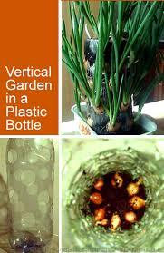 indoor vertical gardening plastic bottles a great idea