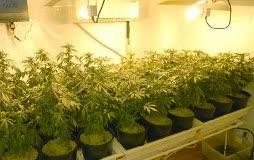 best hps grow lights best lighting for indoor cannabis growing