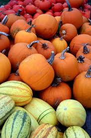 free images nature orange food red harvest produce color