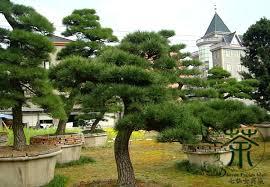 pine tree garden swebdesign