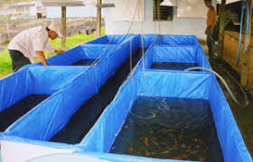city targets to sell 100 million ornamental fish exports