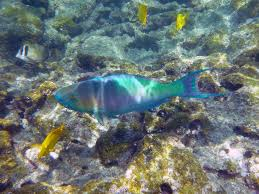 free photo rainbow fish underwater marine free image