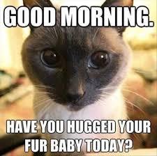 Good Morning Cat Meme - good morning cat humor