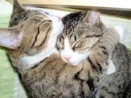 Cat Hug Meme - cat hug meme generator