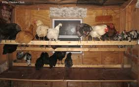 the chicken 5 tips for a cleaner coop with less effort