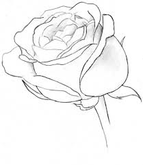 simple sketch of a rose sketch of rose clipart clipart kid