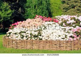 beautiful flowers isabella garden richmond park stock photo