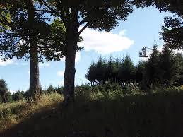 asack u0026 son christmas tree farm u0026 christmas tree seedlings and