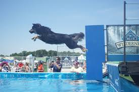 paw palooza makes a splash to benefit mspca animal rescue league