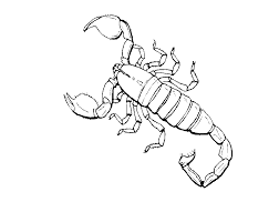 kids n fun com 16 coloring pages of insects
