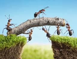 8 ways to get rid of ants dc scientific pest control