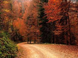 fall wallpaper 13 8189