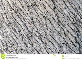 White Oak Tree Bark Detail Of Oak Tree Bark Stock Photo Image 45477479