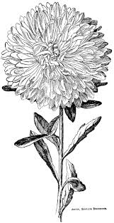 1406 best flower drawings images on pinterest flower drawings