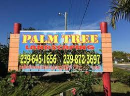 palm tree landscaping pine island cape coral
