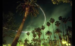 download 2560x1600 los angeles palm trees by the night wallpaper