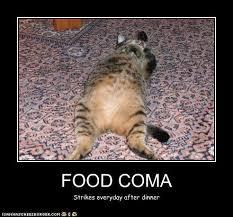 Food Coma Meme - food coma i can has cheezburger