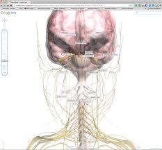 Google Body Anatomy Google Body 3d Model Dr Shock Md Phd