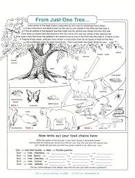 food chain worksheets for kindergarten for service with food chain