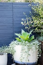 Galvanized Containers For Gardening 38 Ideas For Succulents In Containers Sunset Magazine Sunset