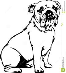 drawn bulldog black and white pencil and in color drawn bulldog