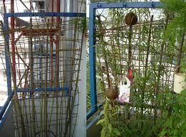 sichtblende balkon sichtschutz im topf container aus weide balkon weidenbau
