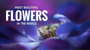 Beuti by 75 Pictures Of Most Beautiful Flowers In The World