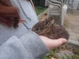 i found a baby bunny album on imgur