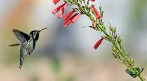 Hummingbird On A Flower - oak glen preserve to open hummingbird hill attraction u2013 san