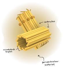 the cytoskeleton article khan academy