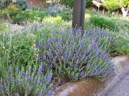 plano prairie garden may 2014