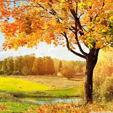 a beautiful view of colorful autumn trees 4k hd desktop
