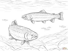 rainbow trout coloring page coloring pages online