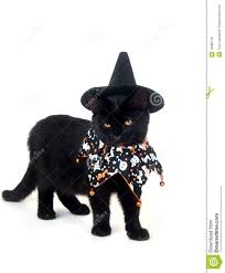 black cat with witch hat and halloween bib royalty free stock