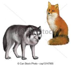 sitting fox and wolf isolated illustration on stock