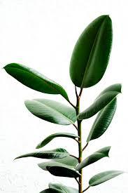 green indoor plants u2013 flowering easy to grow pot plants u2013 fresh