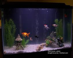 how to take care of goldfish u2013 pets next