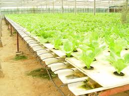 48 best commercial hydroponics images on pinterest hydroponics
