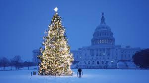 christmas tree lights outside u2013 happy holidays