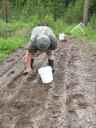 Walk Behind Seed Planter by Off Grid Self Sufficient Montana Homestead Life 14 16 June