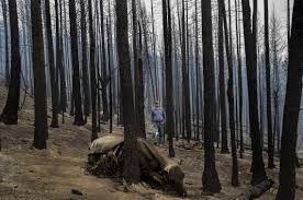 ranchers face loss of livestock livelihoods in washington fires