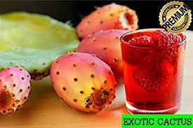 ediable fruit prickly pear cactus opuntia edible fruit 3 seeds