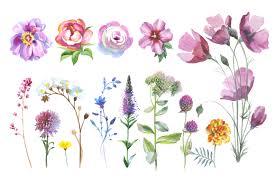 wild flowers watercolor png clipart by design bundles