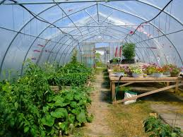 fsn webinar opportunity greenhouse design and management with