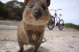 imagenes animales australia on the trail of west australia s cute and not so cute wildlife