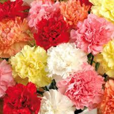 bulk carnations bulk carnations