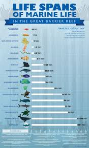 best 25 marine life ideas on pinterest water life water