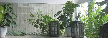 indoor planting indoor planting brisbane brisbane indoor planting contractors