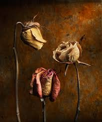 roses by harold ross susan spiritus gallery