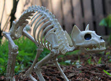 funny cat skeleton stock photos royalty free pictures